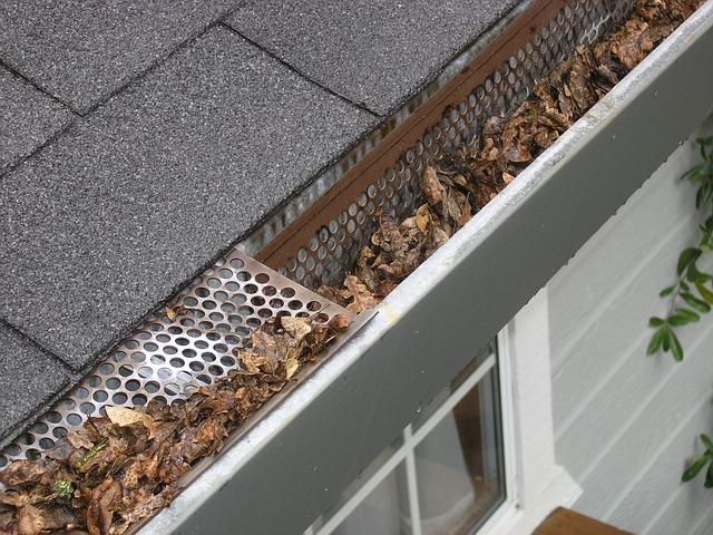 mold damage due to clogged gutters